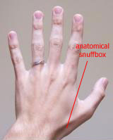 Anatomical snuffbox,boundaries and contents